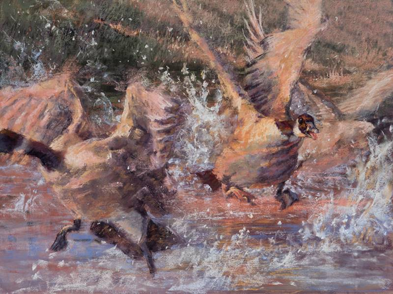 soft pastel painting of canada geese by Sharon Bamber