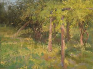 plein air soft pastel painting of old grape vines by Sharon Bamber