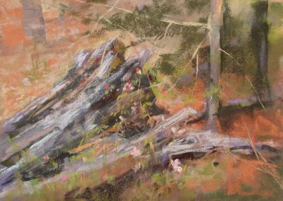 plein air soft pastel painting of an old fallen tree by Sharon Bamber