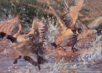 soft pastel painting of canada geese taking off from water by Sharon Bamber