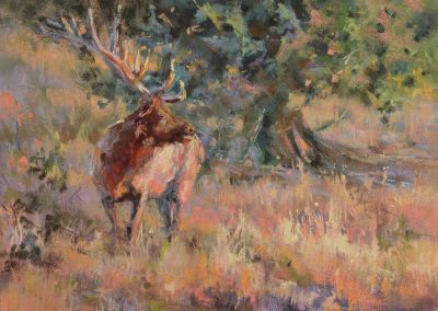 soft pastel painting of a bull elk by Sharon Bamber