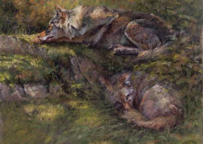 soft pastel painting of two coyotes by Sharon Bamber