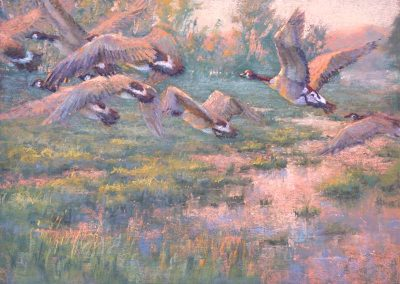 soft pastel painting of canada geese in flight by Sharon Bamber