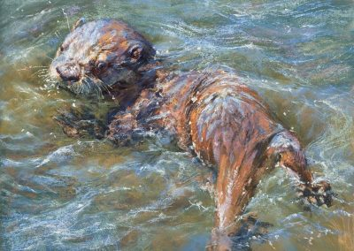 soft pastel painting of an otter pup swimming by Sharon Bamber
