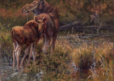 soft pastel painting of a cow moose and calf by Sharon Bamber