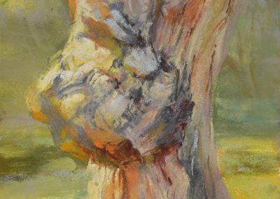 plein air soft pastel painting of a large burl by Sharon Bamber