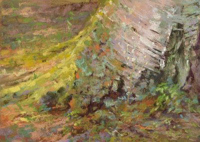 plein air soft pastel painting of an old birch stump by Sharon Bamber