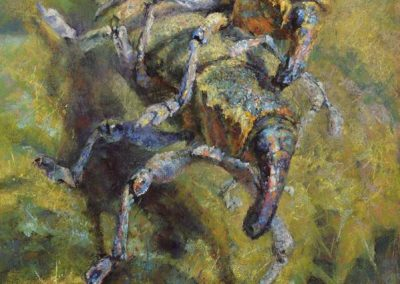soft pastel painting of two weevils mating by Sharon Bamber