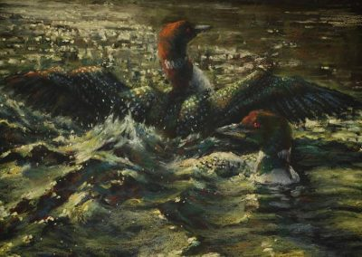 soft pastel painting of loons displaying by Sharon Bamber