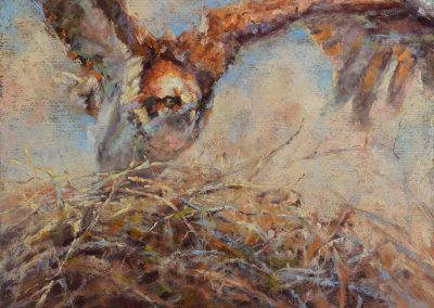 soft pastel painting of an osprey on a nest by Sharon Bamber