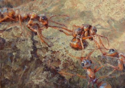 soft pastel painting of ants fighting by Sharon Bamber