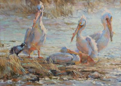 soft pastel painting of pelicans with a coot by Sharon Bamber