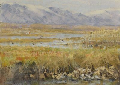 Wetlands and Waterfowl