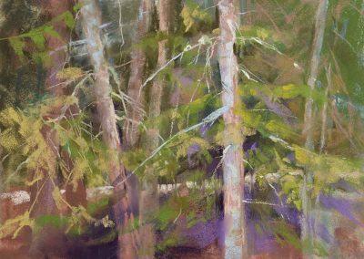 plein air soft pastel painting of trees by Sharon Bamber