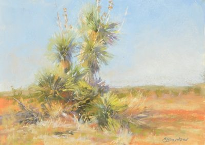 plein air soft pastel painting of a large yucca by Sharon Bamber