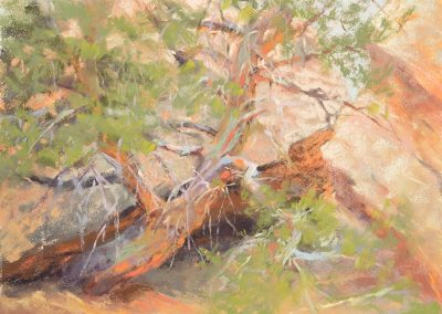 plein air soft pastel painting of mesquite tree and granite boulders by Sharon Bamber
