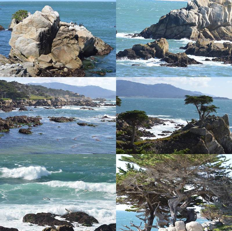 Photos of 17 Mile Drive, CA by Sharon Bamber