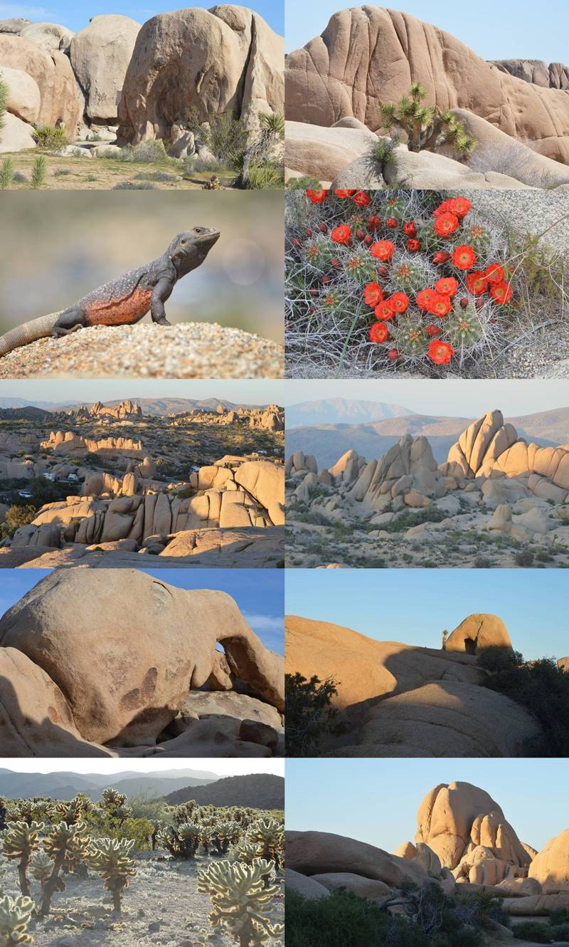 Photos of Joshua Tree National Park, CA by Sharon Bamber