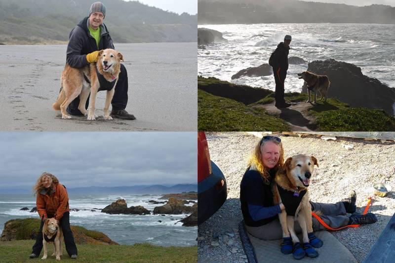 Our dog Lucky, photos by Sharon Bamber