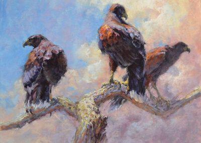 Raptor Team Harris Hawk by Sharon Bamber soft pastel painting of 3 harris hawks