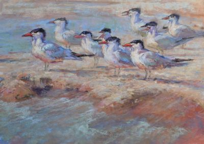 Terns Turned by Sharon Bamber soft pastel painting of terns