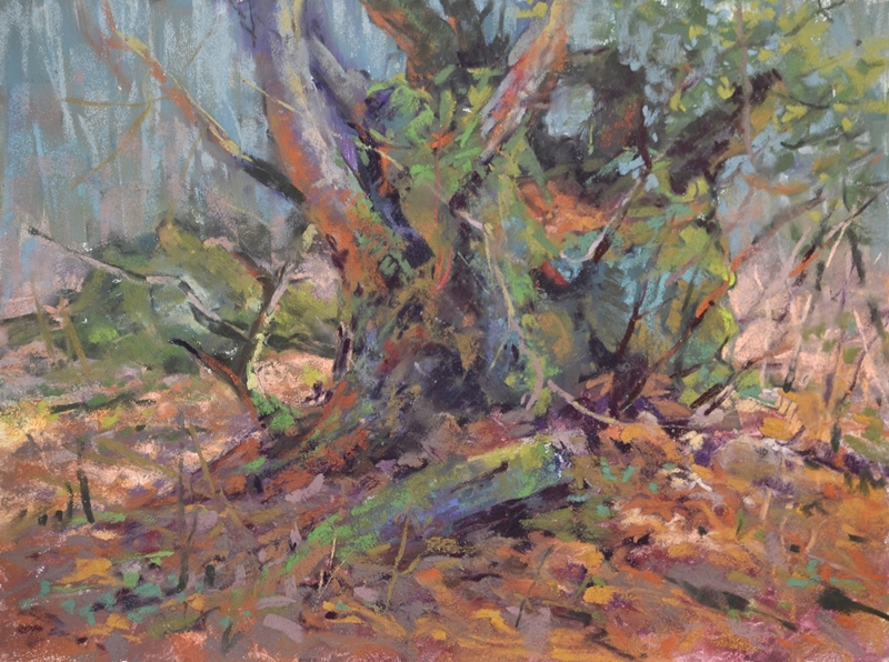 The Ancient Pollard by Sharon Bamber plein air soft pastel painting of an old tree