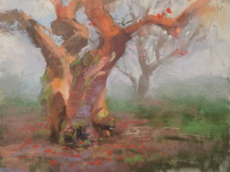 The Coral Tree by Sharon Bamber plein air soft pastel painting of a mature coral tree